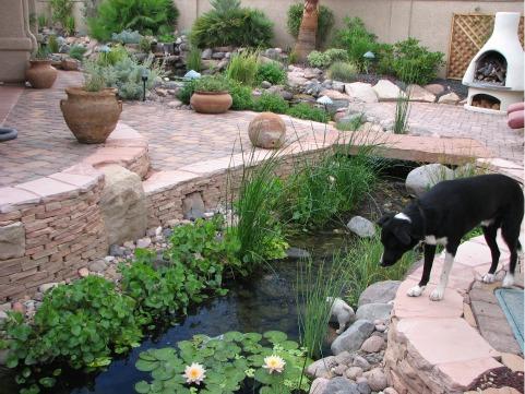backyard-ponds